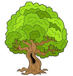 big leafy tree vector image