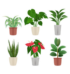 decorative plants home flowers in pots colorful vector image
