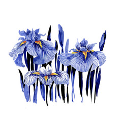 Hand drawn blue iris flowers on white background vector
