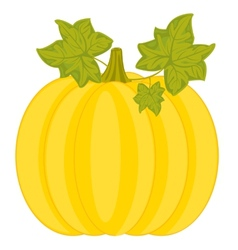 Ripe pumpkin vector image