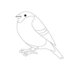 bullfinch bird lining draw profile vector image