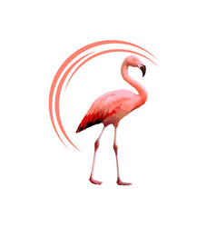 flamingo icon vector image