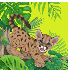 tropical background with angry cougar cub vector image