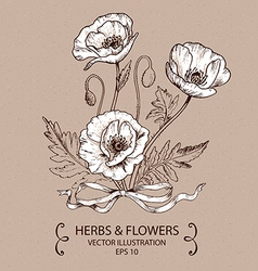 White Poppy vector