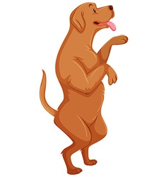 Brow dog standing on two legs vector image