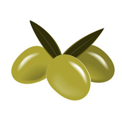 green olives branch with leaves isolated on vector image