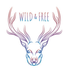 hand drawn colorful deer and lettering vector image