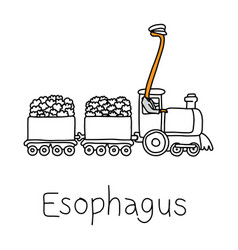 Metaphor function of esophagus to carry food vector