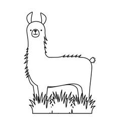 peruvian llama isolated icon vector image