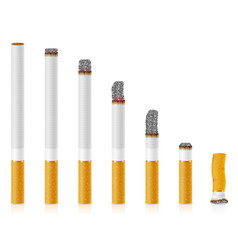 smoldering cigarettes of different lengths stock vector image