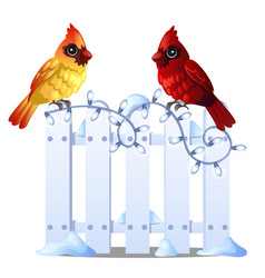 two cute northern cardinal birds sit on a snowy vector image