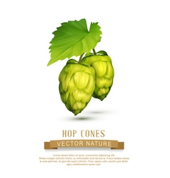 hop cones with leaf isolated on white background vector image