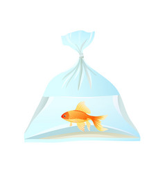 Goldfish swim in plastic bag tied with rope vector