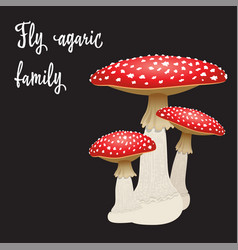 Three fly agaric mushrooms isolated on black vector