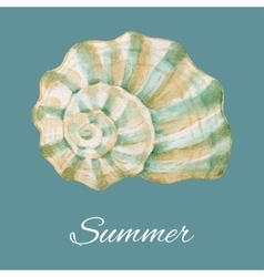 Watercolor sea shell vector