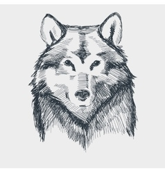 Wolf head grunge hand drawn sketch vector image