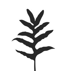black silhouette of fern leaf vector image