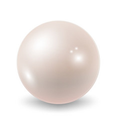 pearl isolated on white back vector image