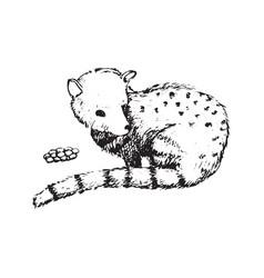 Kopi luwak civet coffee beans creator asia vector