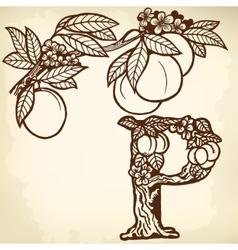 Peach branch litera P vector