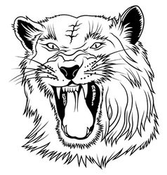 Big Cat Head vector image vector image