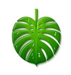 Green tropical monstera deliciosa plant leaf vector