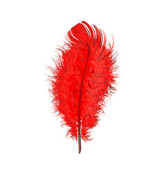 hand drawn tender fluffy red bird feather sketch vector image