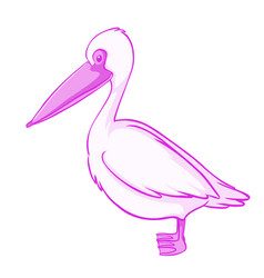 pink pelican on white background vector image
