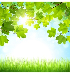 Natural background vector image