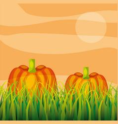 Agriculture plantation vegetable pumpkin vector