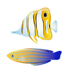 Butterfly fish and blue striped tamarin wrasse vector