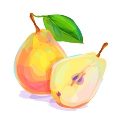 Pear hand drawn on a white background vector