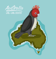poster gang-gang cockatoo in australia map in vector image