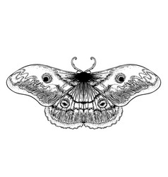 black and white decorative of vector image
