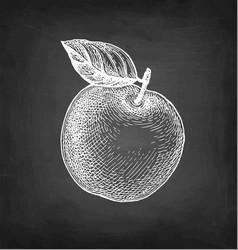 Chalk sketch apple vector