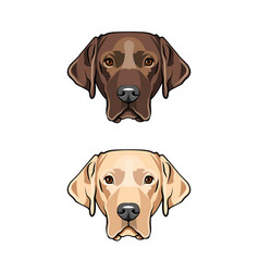 yellow and black young labrador vector image