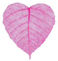 red heart skeleton leaf vector image vector image