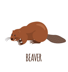 funny beaver in flat style vector image vector image