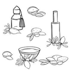 Argan oil sketch vector