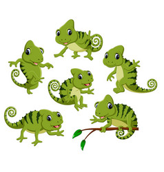 Collection of the green chameleon vector