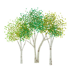 Hand drawn aspen birch trees vector