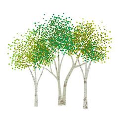 hand drawn aspen birch trees vector image