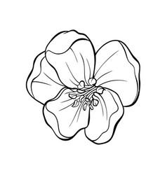 Japanese apple tree flower head contour drawing vector