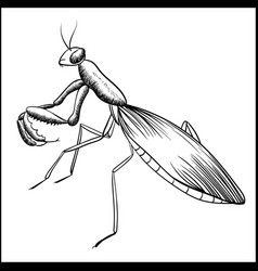 Praying mantis sketch iisolated on white vector