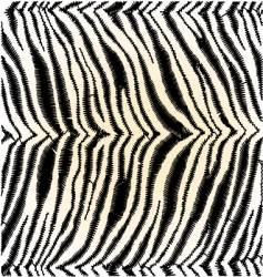 zebra skin vector image