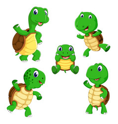collection of the tortoise vector image