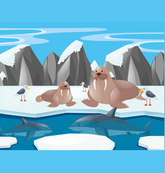 Sea lions and shark in the north pole vector