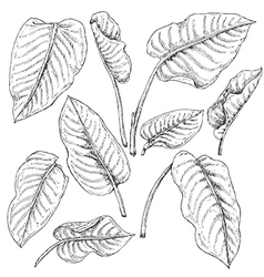 doodle diph set vector image