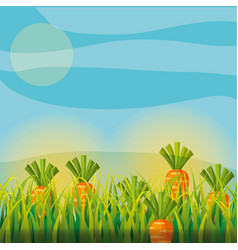 agriculture plantation vegetable carrot vector image
