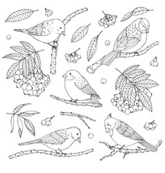 Hand drawn set of birds branches leaves vector